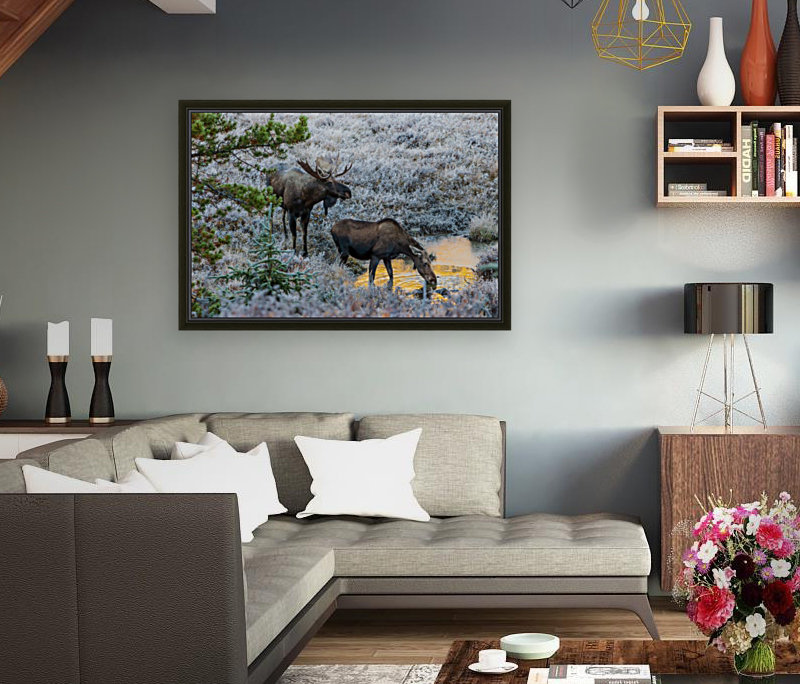 Moose On Golden Pond  Art
