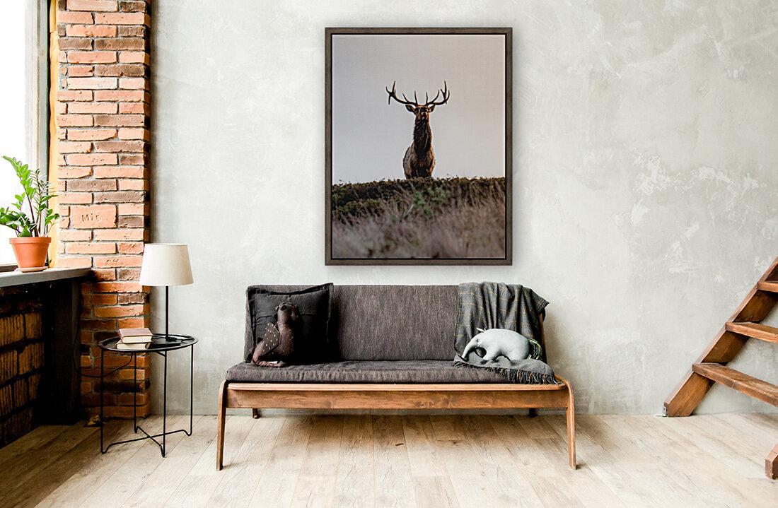 Tule Elk On Top Of A Hill  Art