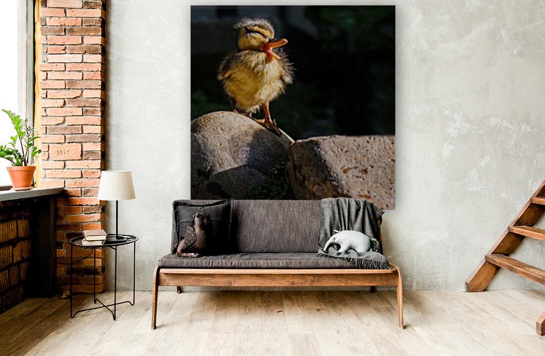 Quacking Duckling  Art