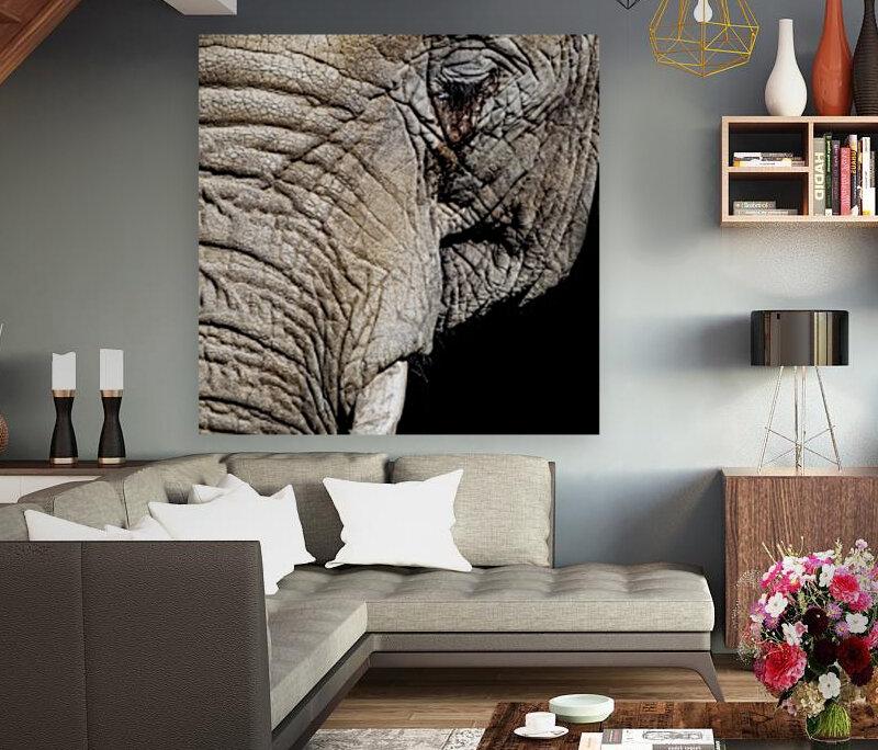 Elephant Close Up  Art
