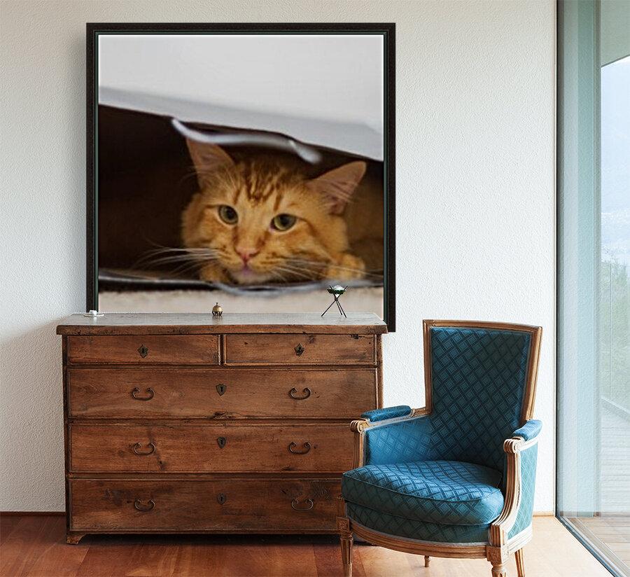 Cat In The Bag  Art