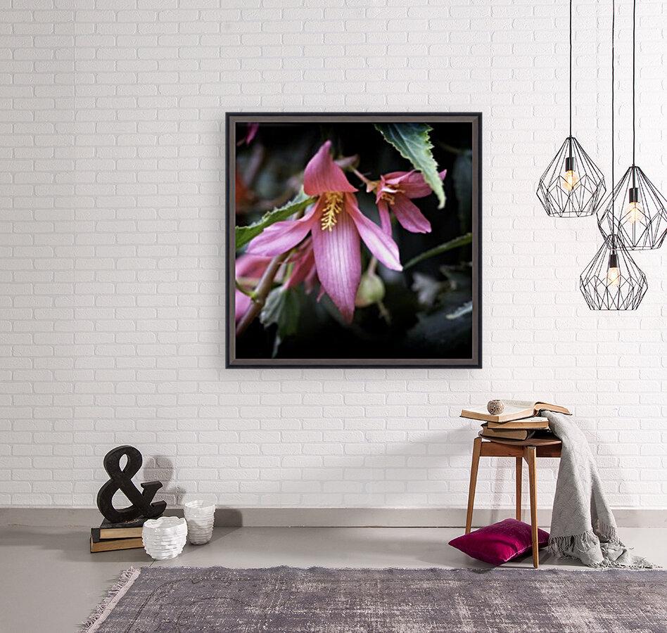 Begonia   Art