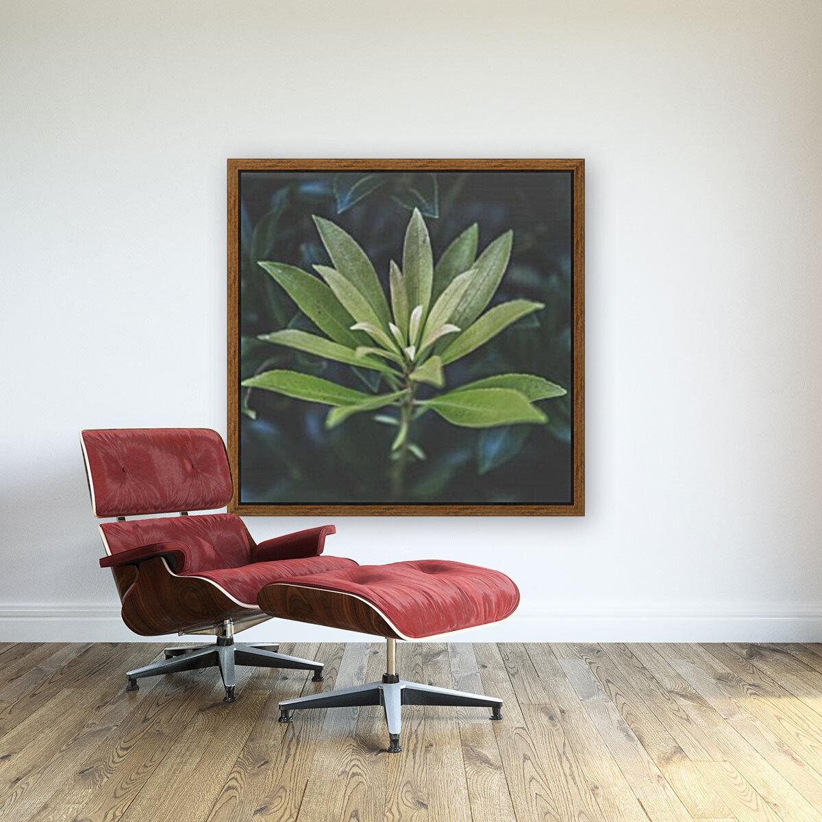 Bamboo shoots  Art
