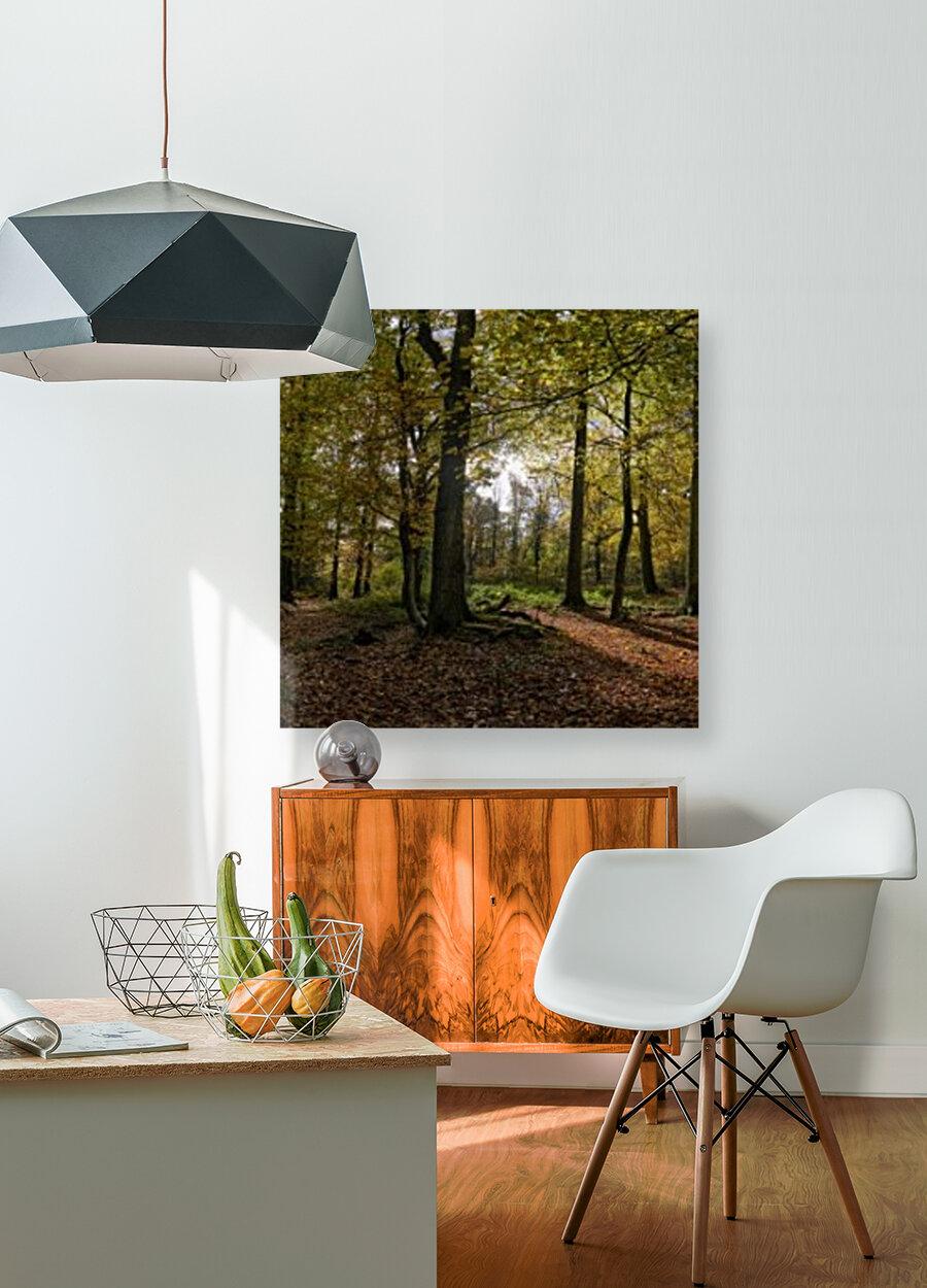 Autumn Forest  Art