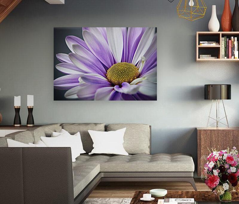 Purple Daisy  Art
