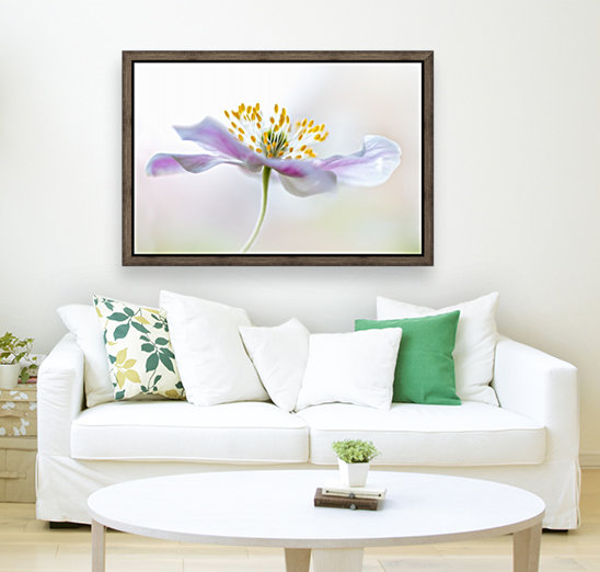 Wood Anemone with Floating Frame