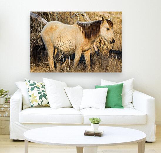 Wild Horse ap 2740  Art