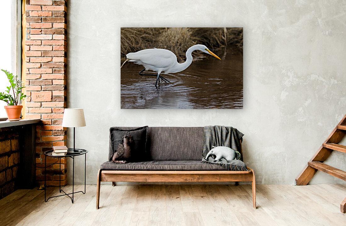 Great White Egret ap 2802  Art