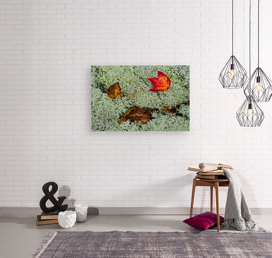 Leaves  N  Lichen ap 1553  Art