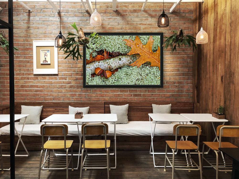 Pin Oak Leaf ap 1557  Art