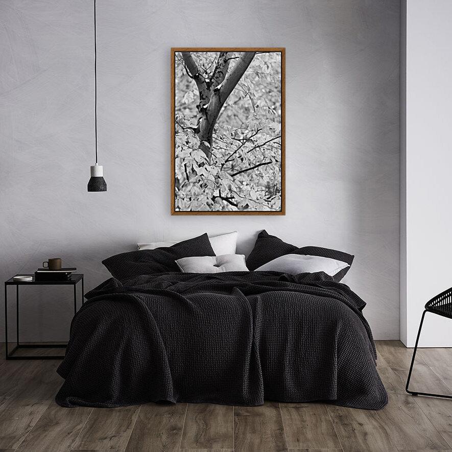 Beech Tree ap 1586 B&W  Art