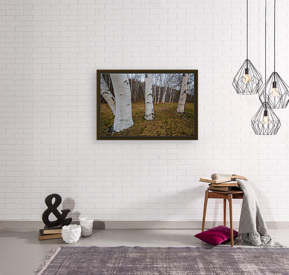 White Birch ap 2242  Art