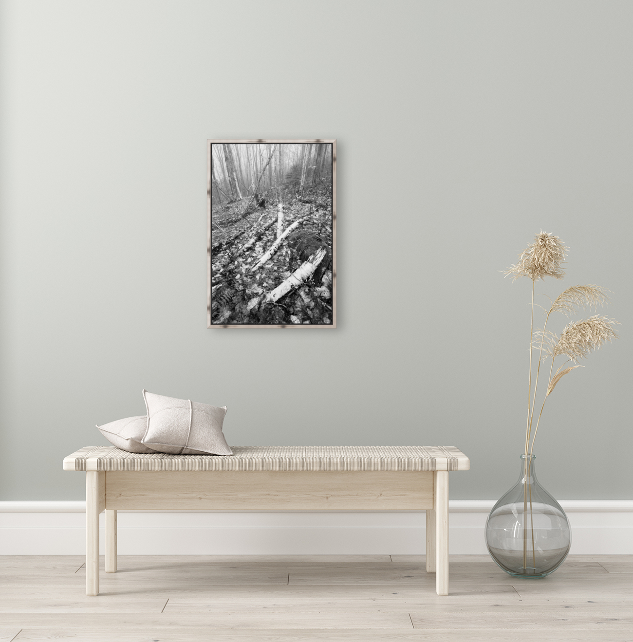 White Birch ap 2186 B&W  Art
