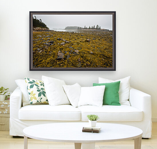 Low Tide ap 2271  Art