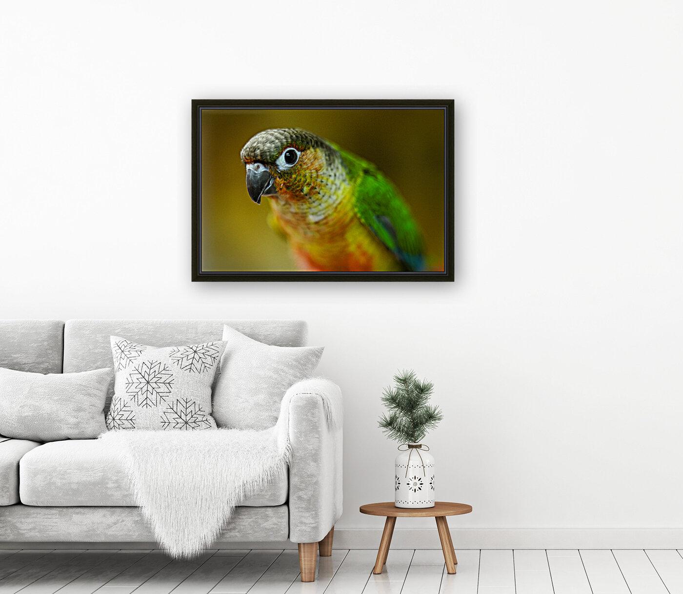 Parakeet  Art