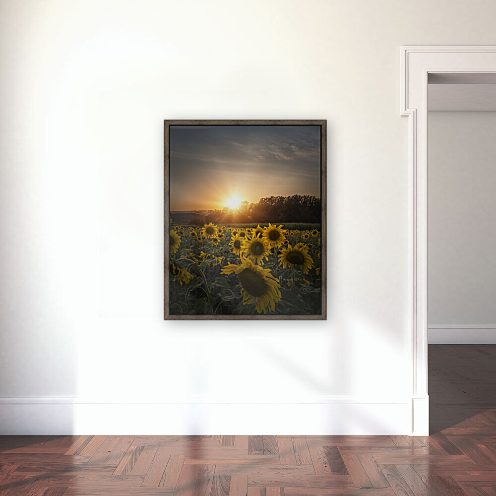Sunflower Sunset  Art