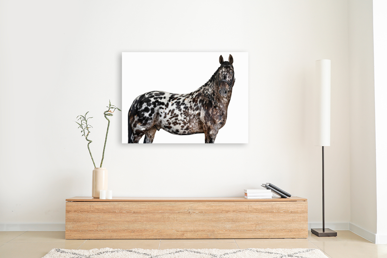 Spotted Horse Portrait  Art