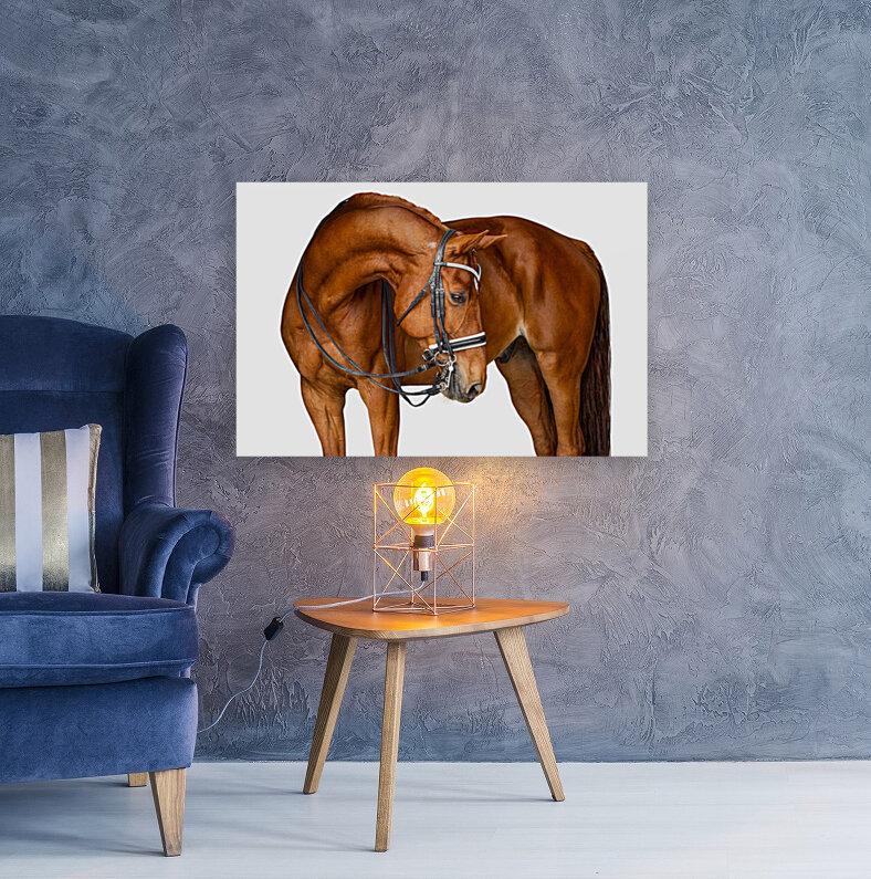 Chestnut Horse Portrait  Art