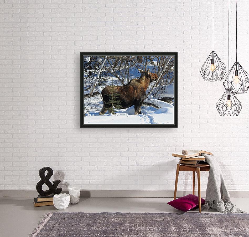 Hungry Moose  Art