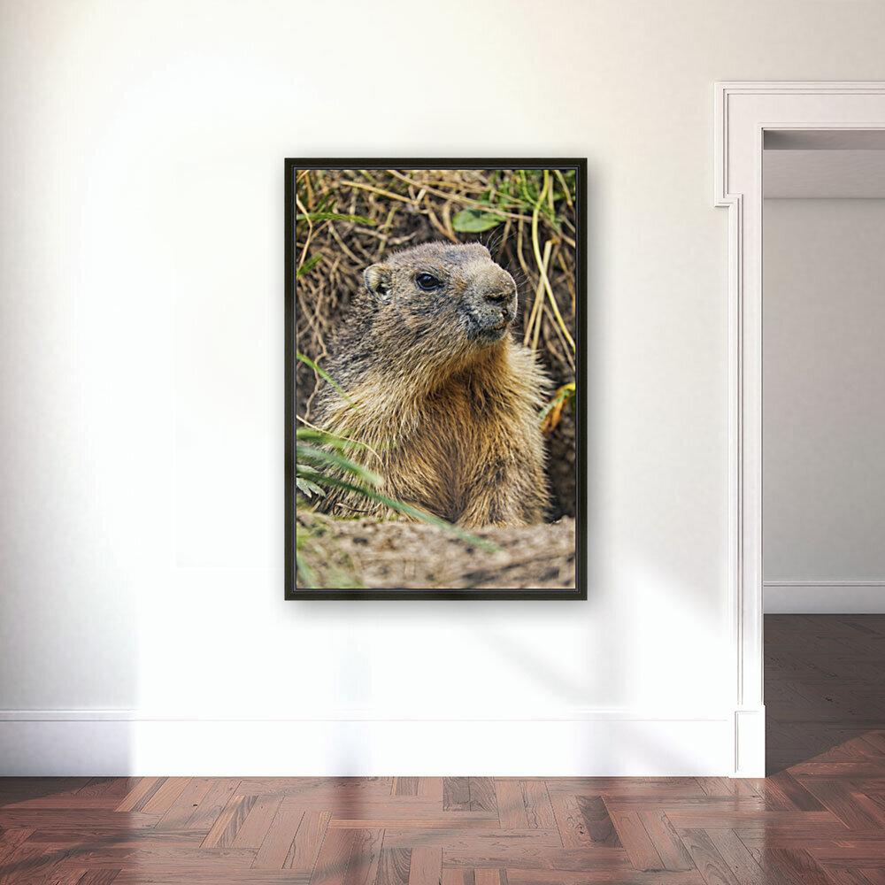 Alpine Marmot  Art