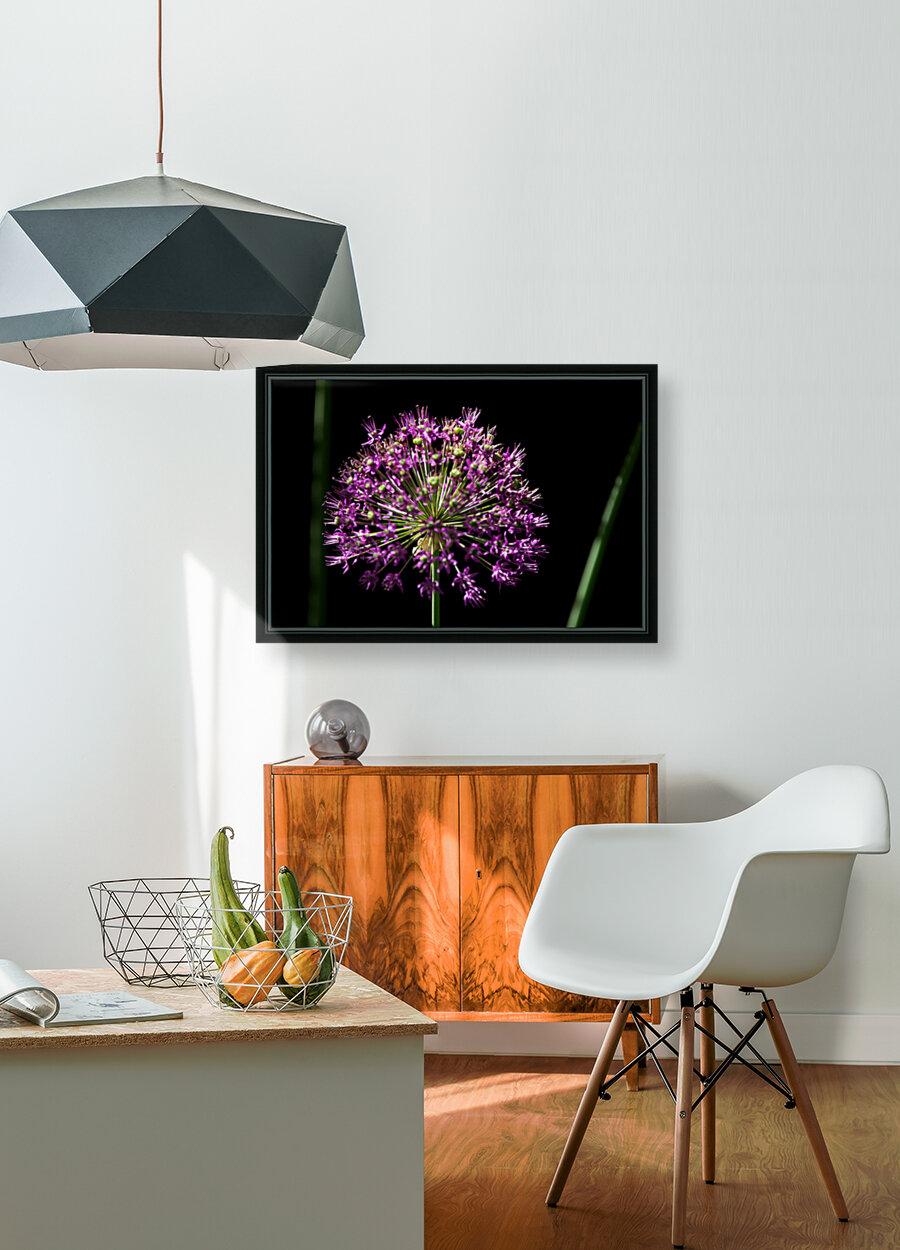 Purple Allium  Art