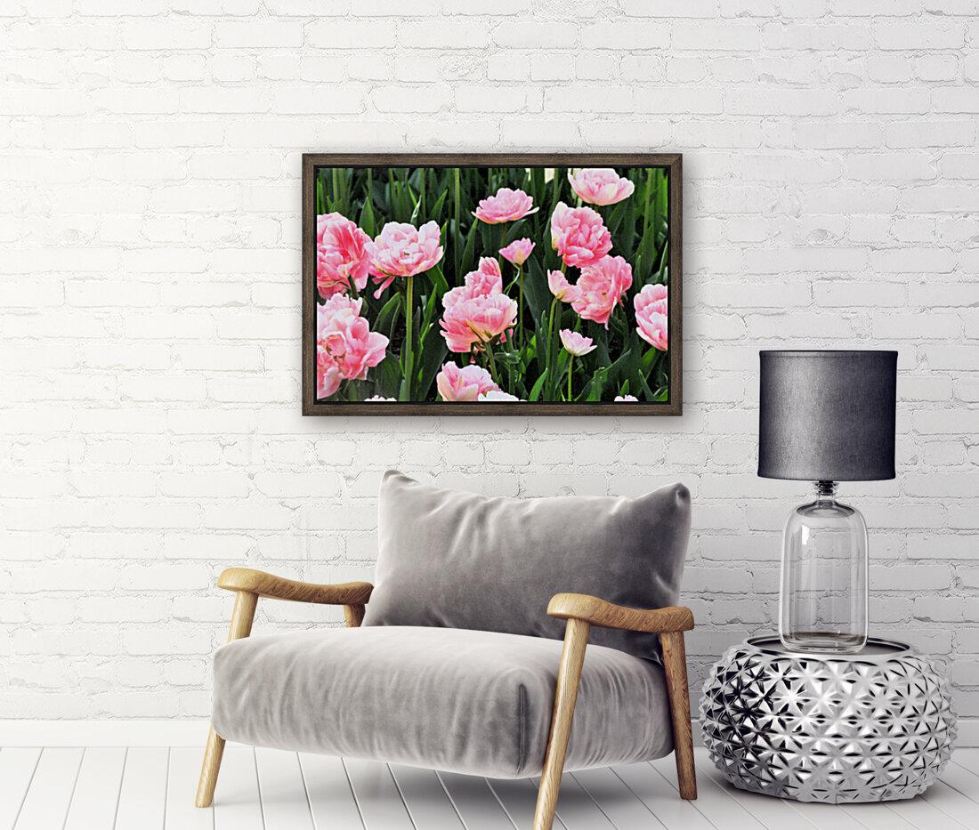 Double Pink Tulips  Art