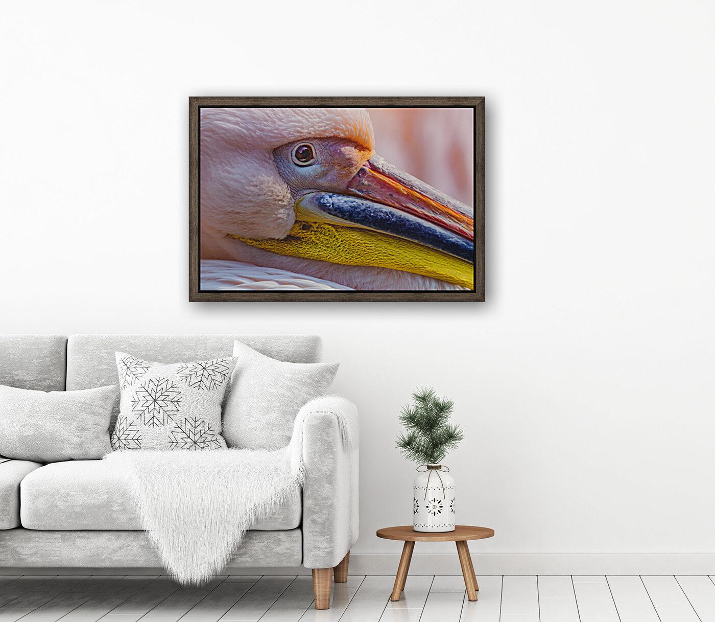 Pelican portrait  Art