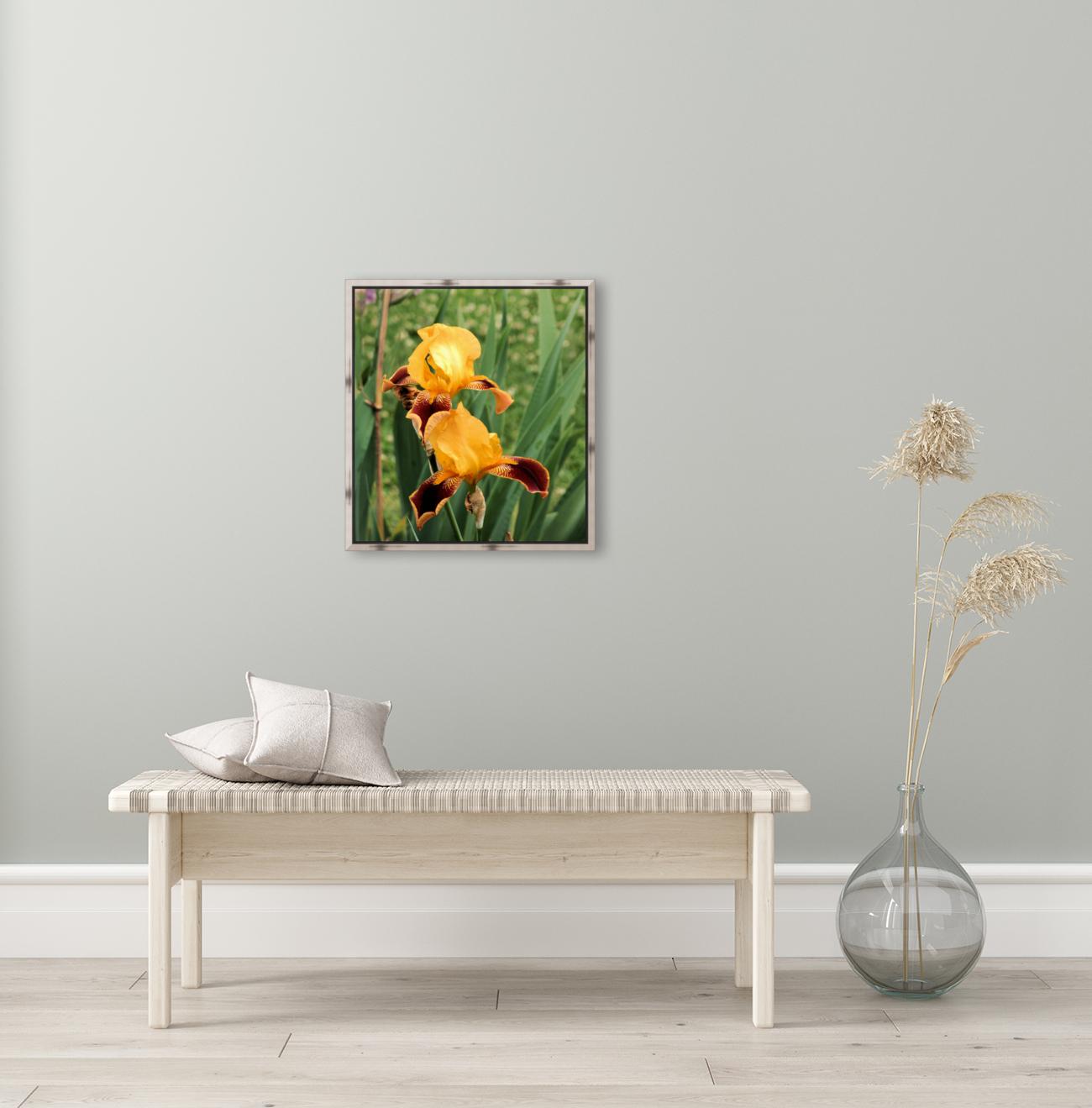 Yellow Brown Iris  Art