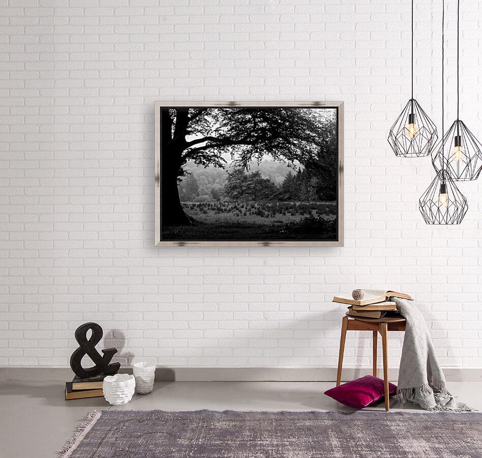 Black and White Field  Art