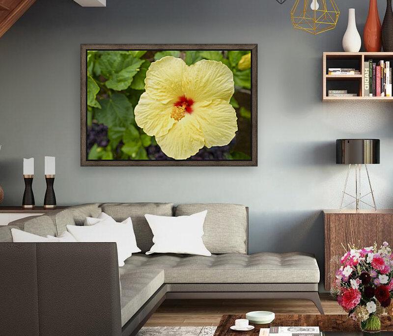 Yellow Hibiscus Tropical Flower Hawaii  Art