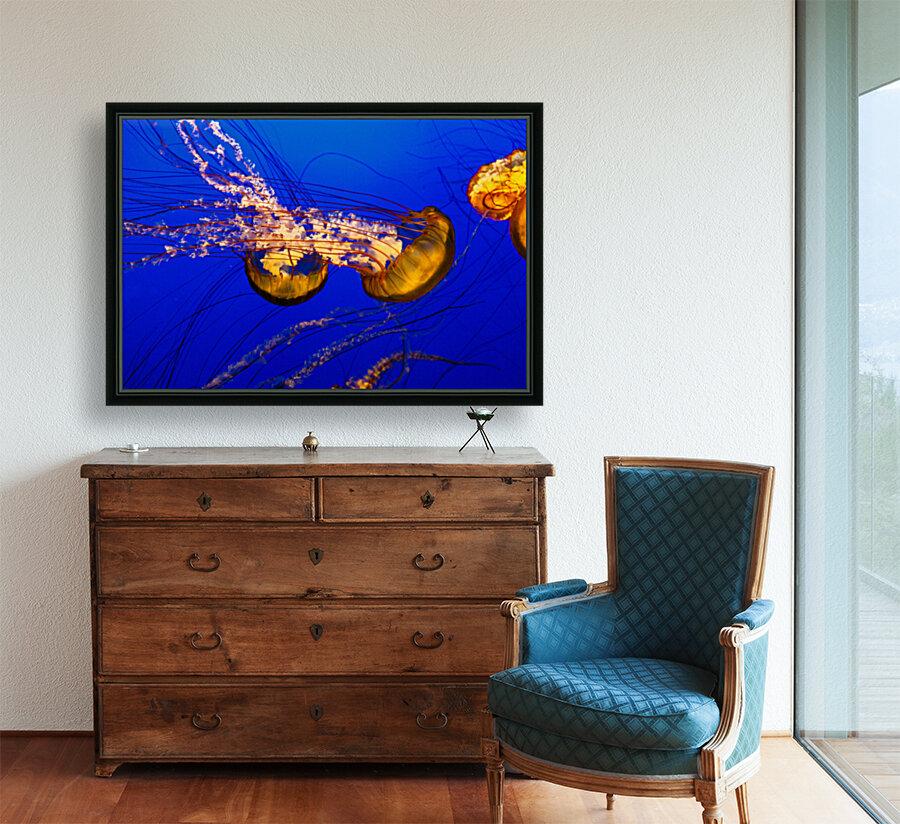 Monterey Jellyfish  Art