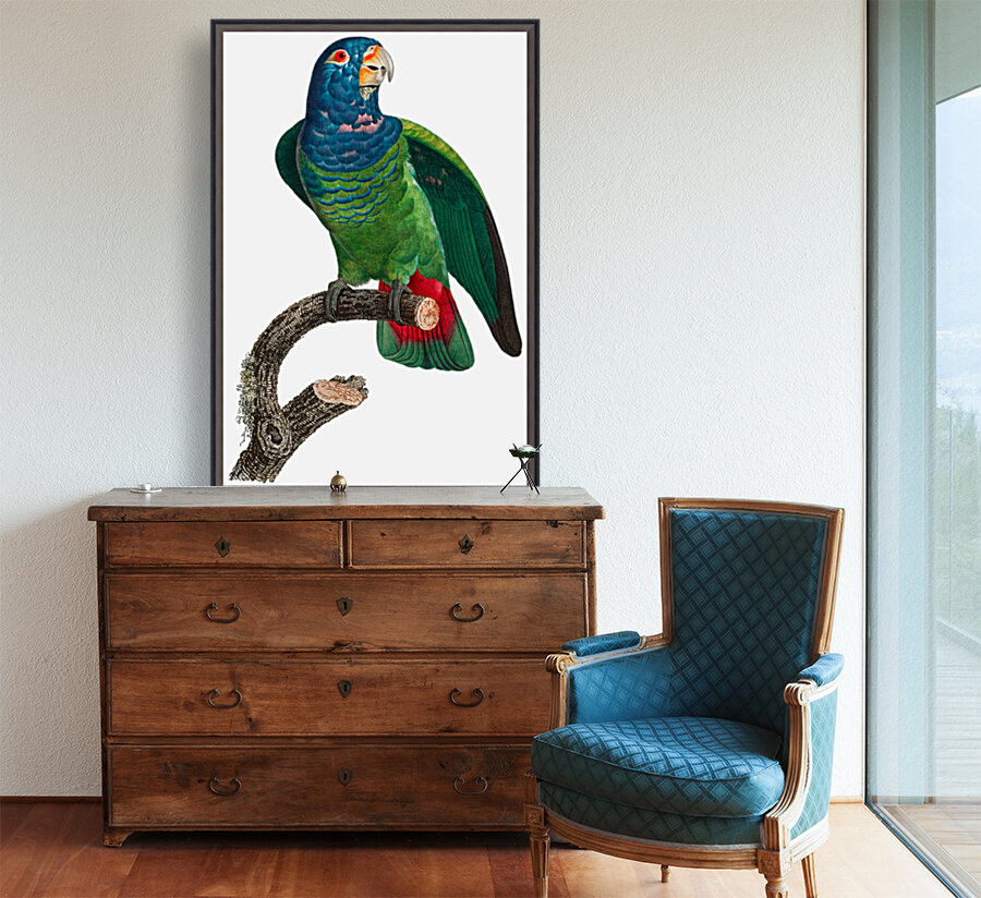 Parrot Print Antique Space Painting Vintage Drawing Poster Wall Art vintage animal parrot photo Tropical Parrot Art   Art