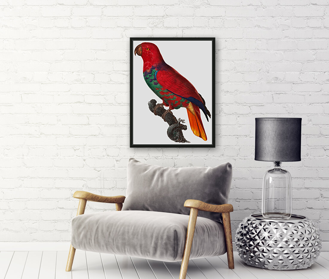 Parrot Print Antique Space Painting Vintage Drawing Poster Wall Art Eclectus Parrot Vintage parrot print Parrot Poster Print   Art