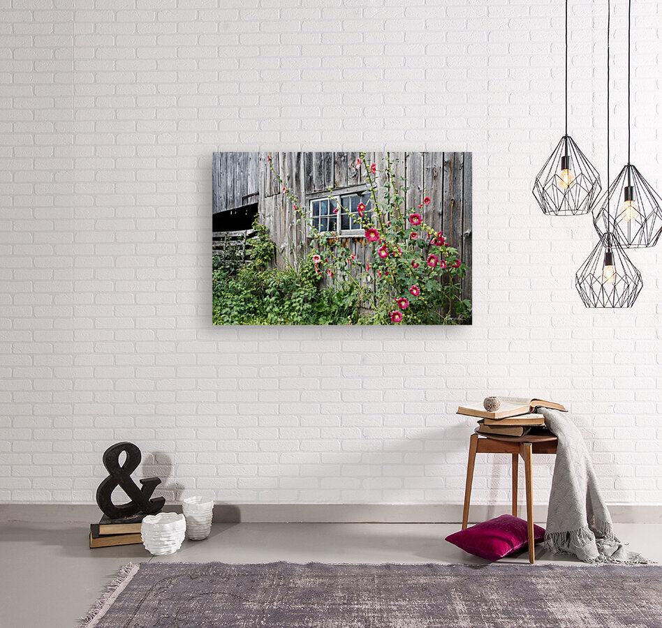 Roses tremieres embellies par une vieille grange - Hollyhocks embellished by an old barn  Art