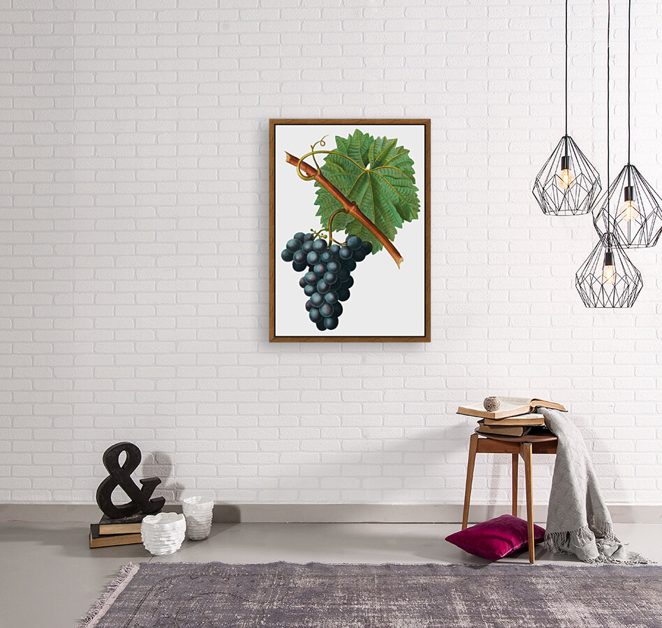 Grape Spanna Antique Art Kitchen Art Grapes Vintage Grapes Pic Grape Vine Grape Leaves Winery Spanna Grapes Wine Blued 02Element 3  Art