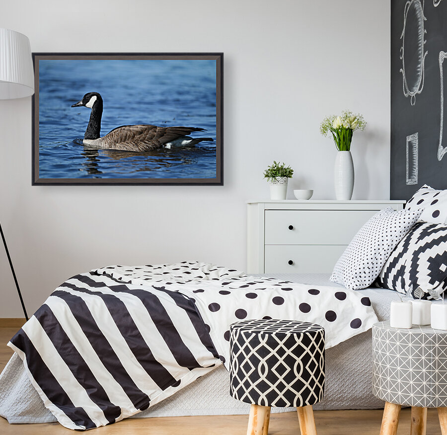 Canada Goose on water  Art