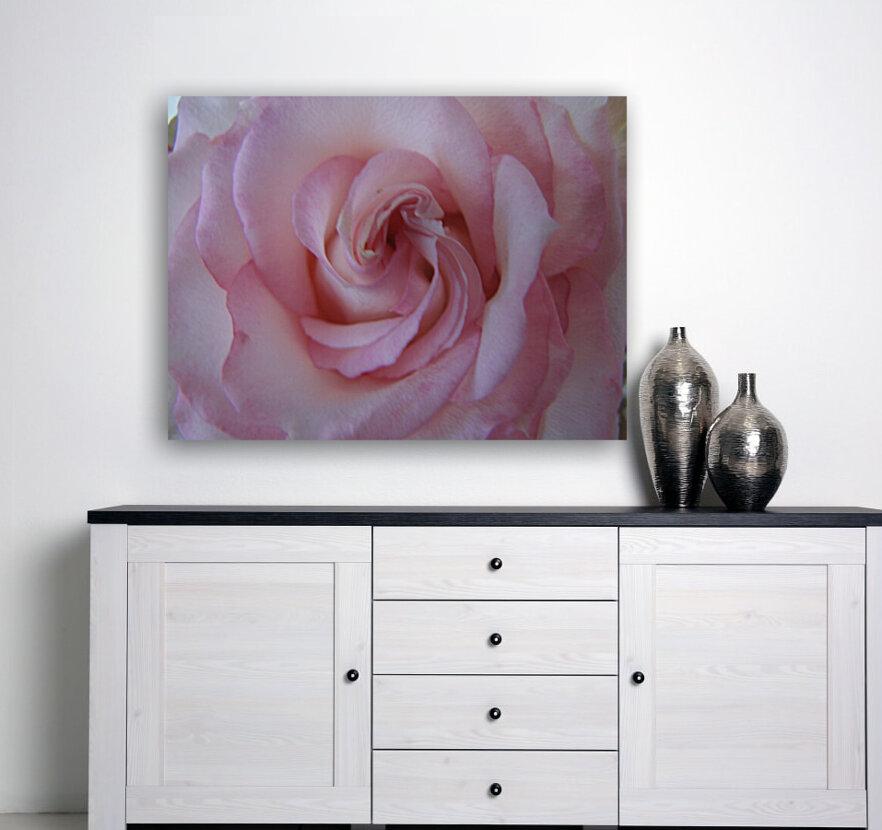 Softness  Art