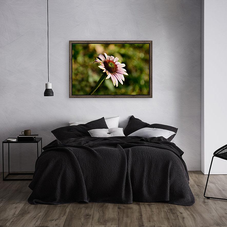 Autumn Echinacea  Art