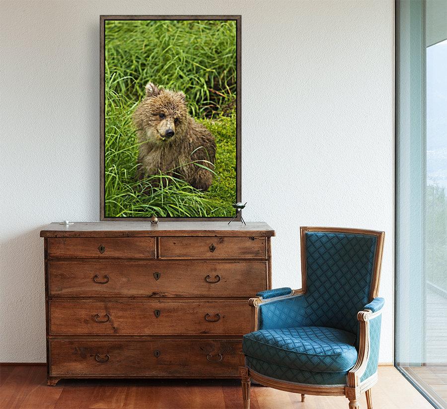 Brown bear (Ursus arctos) cub close-up, sitting in grass, Katmai National Park and Preserve, Southwest Alaska, USA  Art