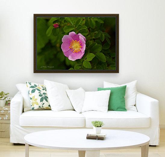 Nootka Rose  Art