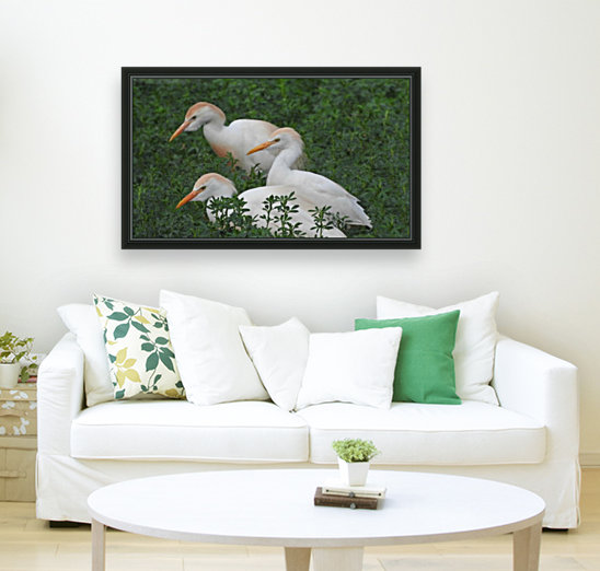 Cattle Egrets  Art