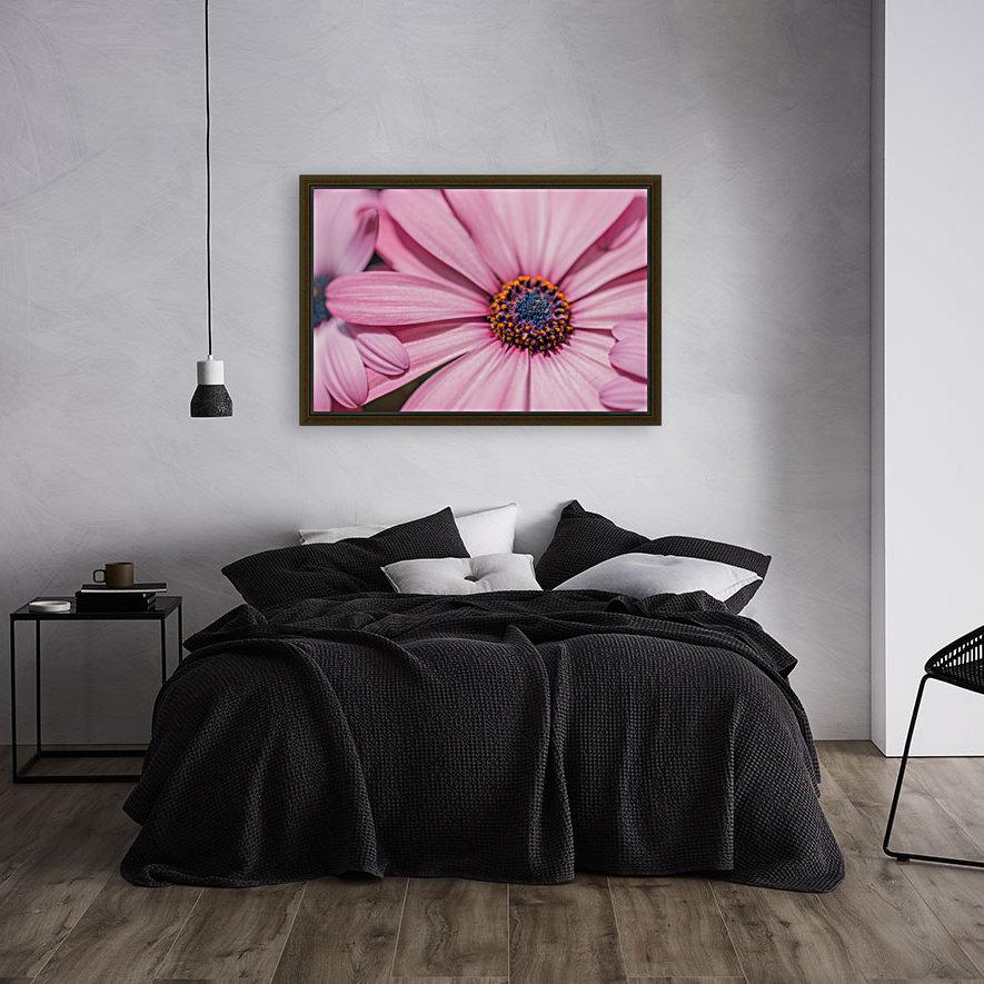 Gerbera flower background  Art