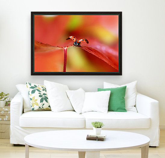 Ladybird in autumn  Art