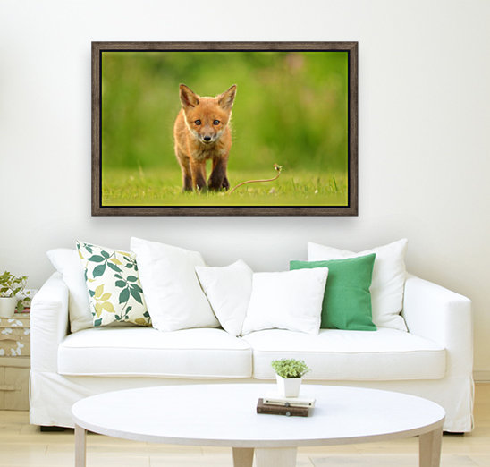 Baby Red Fox  Art