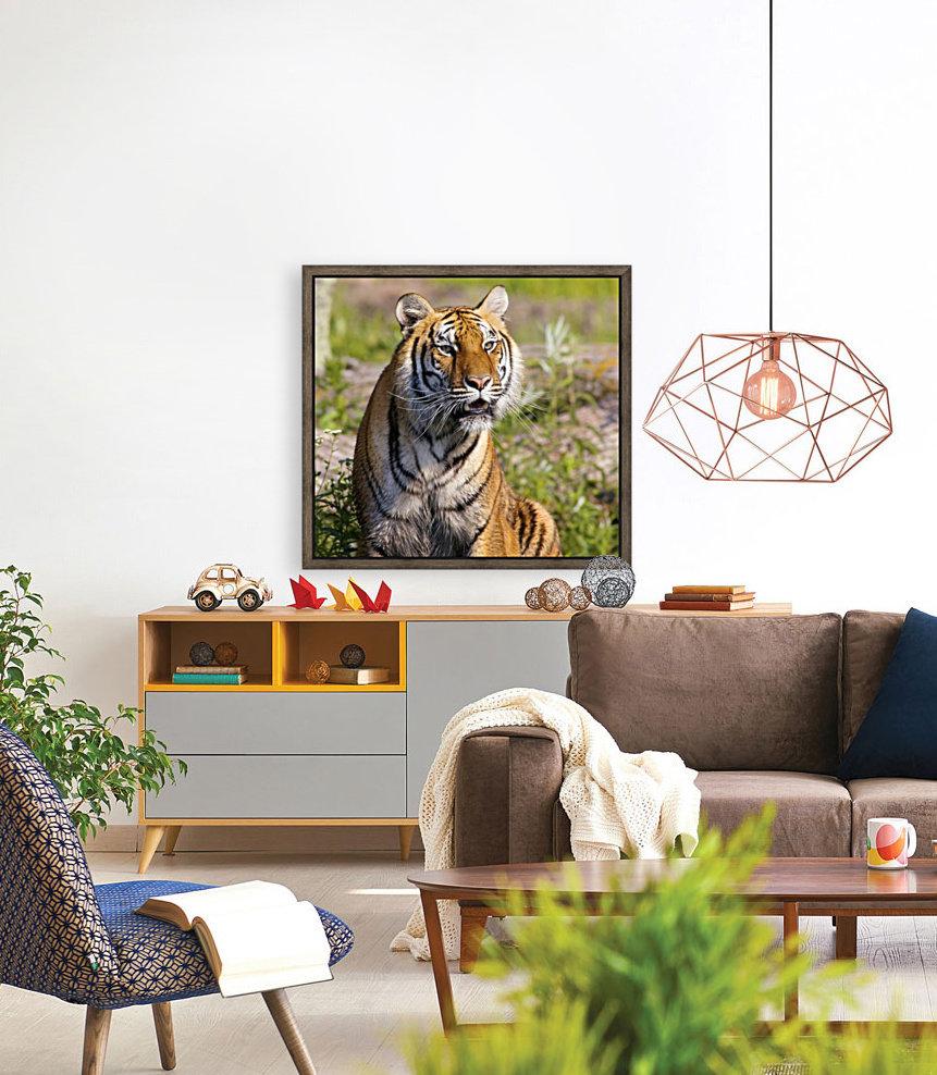 Tiger Watching  Art