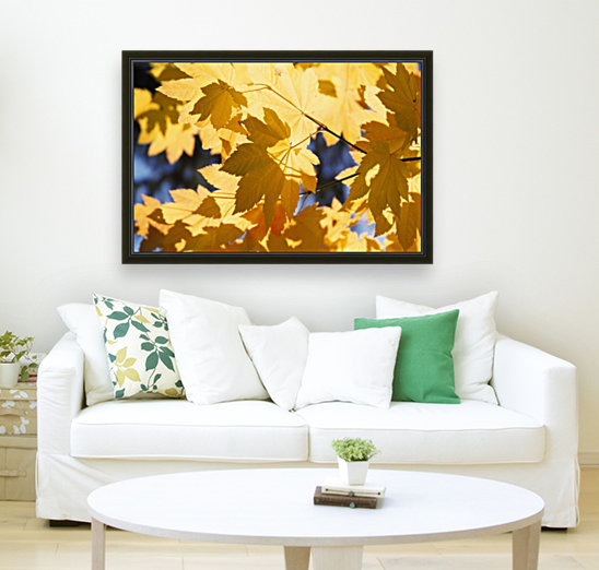 Vine Maples Leaves In Autumn with Floating Frame