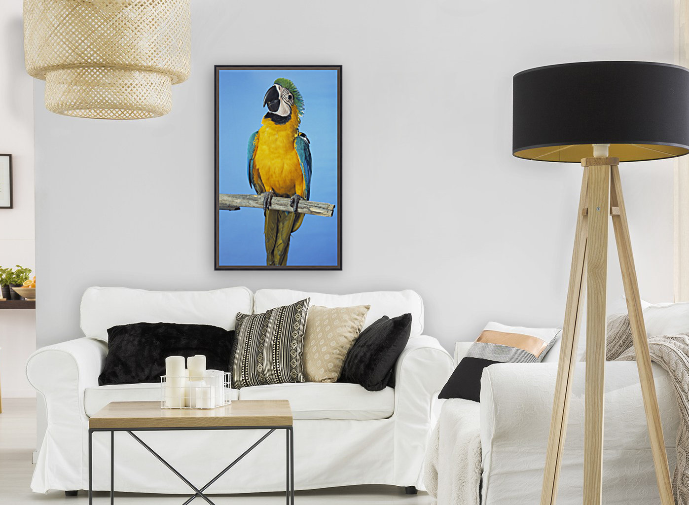Blue-And-Gold Macaw  Art