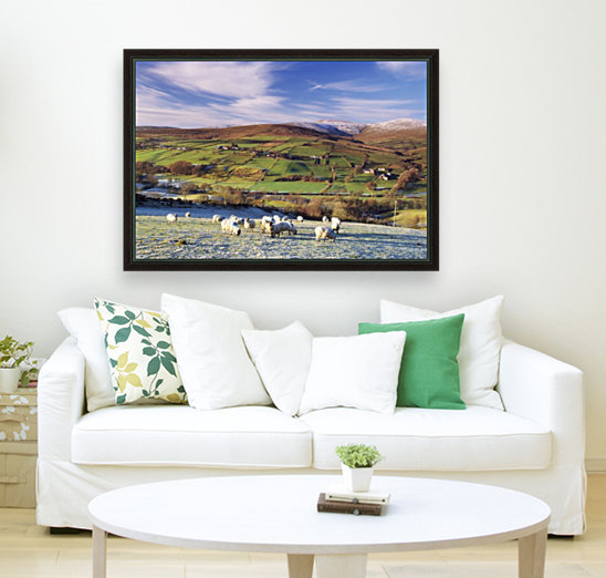 Sperrin Mountains, County Tyrone, Ireland, Sheep  Art