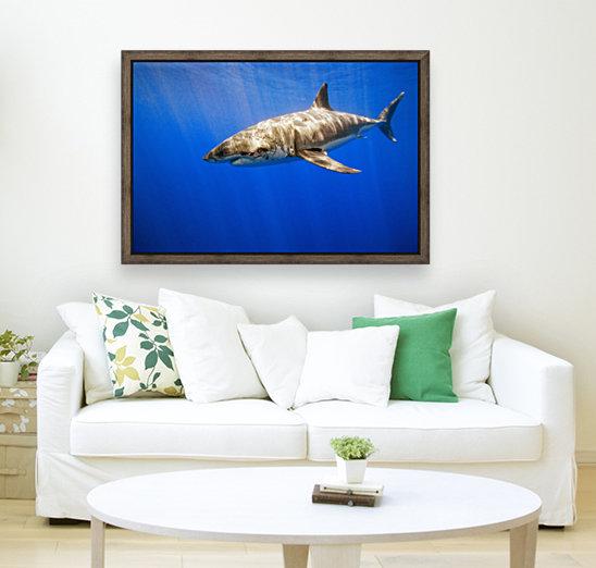 Great White Shark  Art