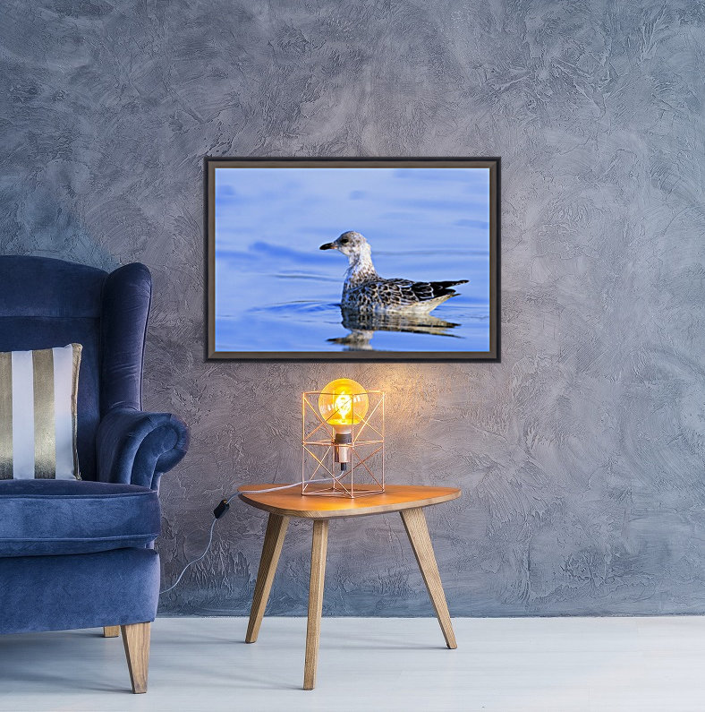 Young Gull Swimming with Floating Frame